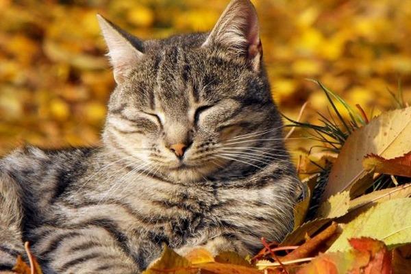 бабине літо осінь кіт