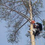 обрезка деревьев в днепре стоимость 100 миллионов тендер