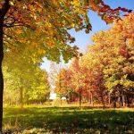 рання осінь природа